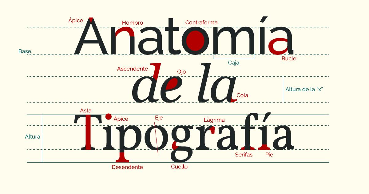 Anatomía de la tipografía